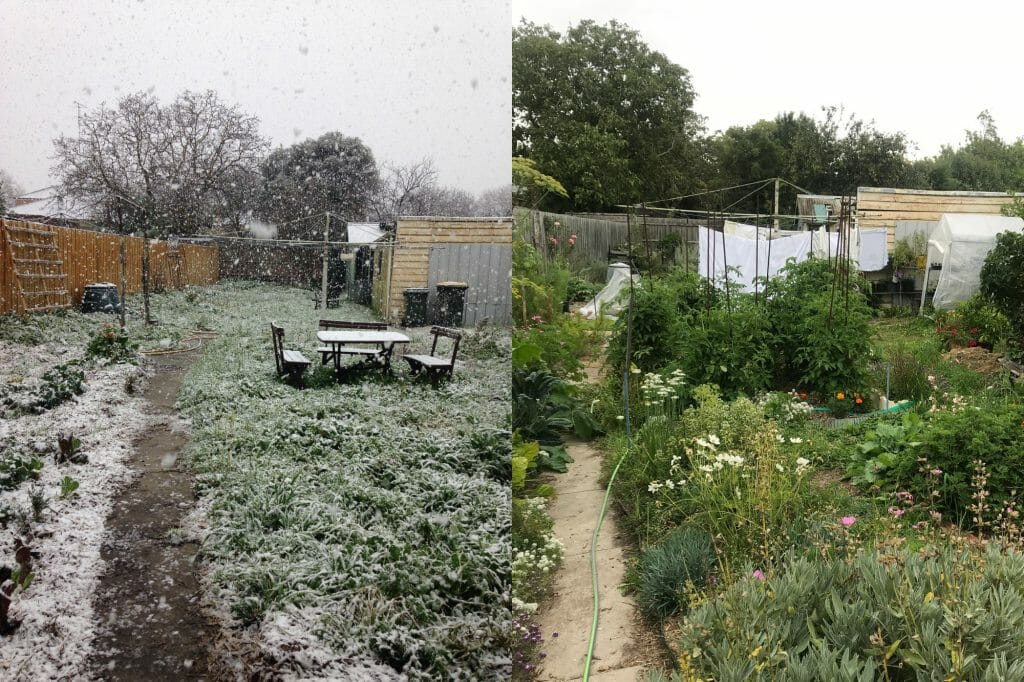 Before and after view of our backyard, showing the growth of abundant vegetables and other edibles